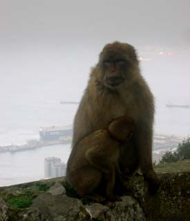 Singes au-dessus du port - Photo C.Talvard